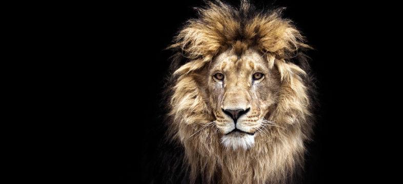 Yritys – ilmianna nyt vuoden johtaja! Kuvassa leijona.